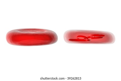blood cells red blood cells