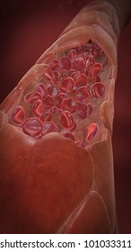 blood vessel with erythrocytes - red blood cells, portrait