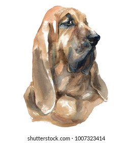 Bloodhound - hand-painted watercolor dog