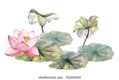 Blooming lotus and leaves on the  pond. hand drawn watercolor illustration.