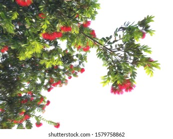 Blooming pohutukawa flowers in a New Zealand Christmas tree.