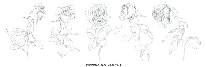 Wilting Flower Drawing Images Stock Photos Vectors Shutterstock