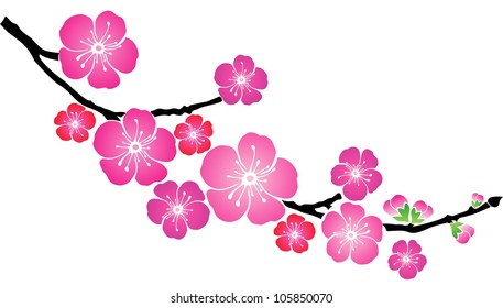blossom cherry isolated on White background. illustration