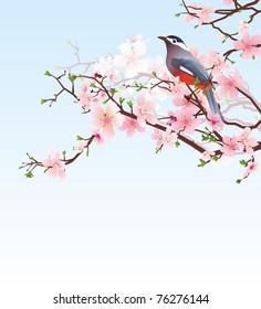 blossoming cherry tree with beautiful bird
