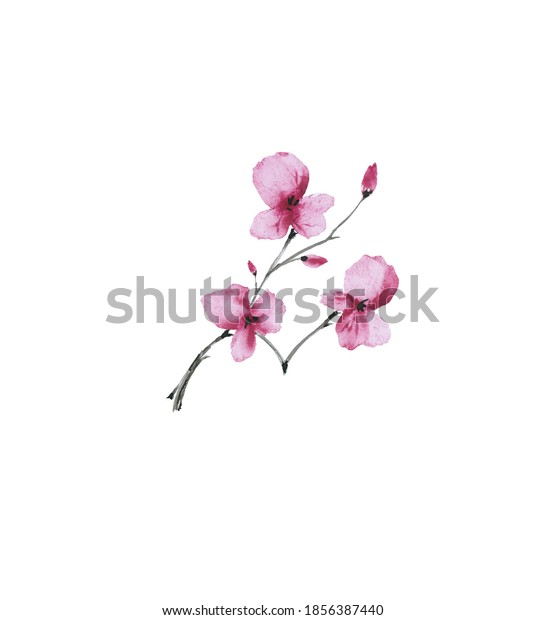 Blossoming spring branch plum with pink flowers on a background white. Watercolor. Isolated