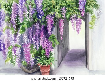 Blossoming wisteria garden against the wall with a door