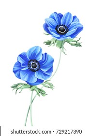Blue anemones isolated on white background. Hand drawn watercolor illustration.