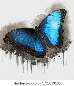 Blue Black Butterfly. Digital watercolor painting of Butterfly. Painting of Beautiful image of a Butterfly in the Forest. Endangered Animal Abstract Paintings Wallpaper. Portrait of Butterfly