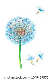 Blue blowball watercolor illustration. Dandelion flower.