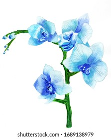 Blue branch of blooming orchid watercolor illustration drawing