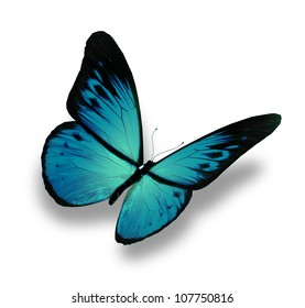 Blue butterfly flying, isolated on white background