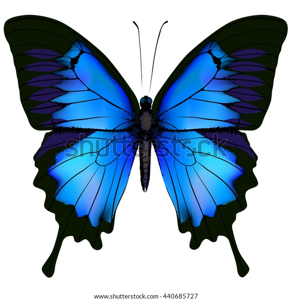 Blue butterfly papilio ulysses. Mountain Swallowtail isolated on white background