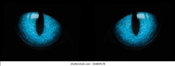 Blue cat eyes glowing in the dark. Two blue eyes glowing in the darkness isolated on black.
