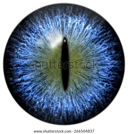 blue cat reptile eye narrow pupilのイラスト素材 266504837 shutterstock