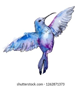 Blue colibri in a wildlife. Wild freedom, bird with a flying wings. Watercolor background illustration set. Watercolour drawing fashion aquarelle. Isolated hummingbird illustration element.