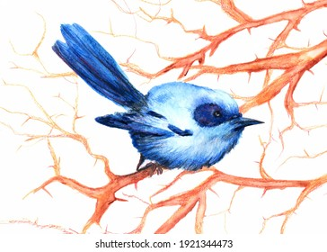 Blue colored bird watercolor illustration