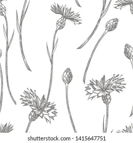 Blue Cornflower Herb or bachelor button flower bouquet isolated on white background. Set of drawing cornflowers, floral elements, hand drawn botanical illustration. Seamless pattern.