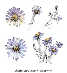 Blue cornflower set. Realistic hand drawn flowers isolated on white background. Pencil, watercolor. Botanical art illustration. Vintage design for sketchbook, greeting card, postcard, invitation.