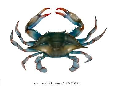 Blue crab on white background