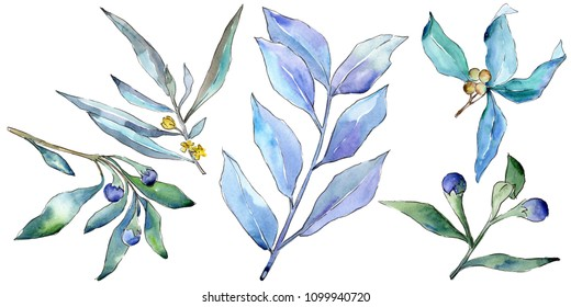 Blue elaeagnus leaves in a watercolor style isolated. Aquarelle leaf for background, texture, wrapper pattern, frame or border.