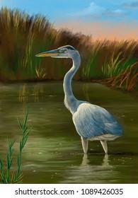 Blue heron fishing in a pond. Original digital painting.