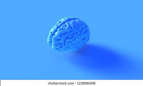 Blue Human brain Anatomical Model 3d illustration 3d rendering