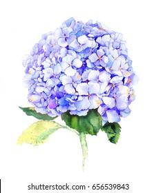 Blue hydrangea flower. Watercolor.