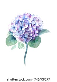 Blue Hydrangea watercolor illustration on a white background suitable for wedding invitation card