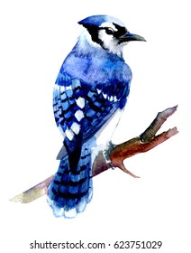 blue jay artwork bird watercolor
