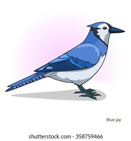 Blue jay bird learn birds educational game raster illustration