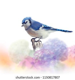 Blue jay in Flower garden,watercolor painting on white background