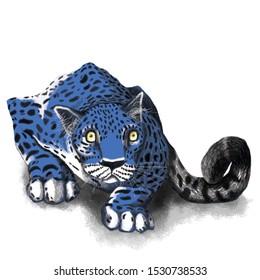 Blue Leopard Pouncing, Blue leopard print, Jaguar stalking prey, Predator in the wild, Big cat, Wild cat hunting, Dangerous wild animal, Eye contact
