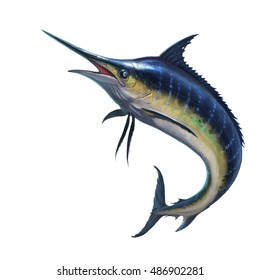 Blue marlin striped marlin on white, fish sword. Realistic isolated illustration.