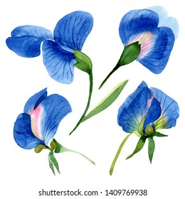 Blue sweet pea floral botanical flowers. Wild spring leaf wildflower isolated. Watercolor background illustration set. Watercolour drawing fashion aquarelle. Isolated sweet pea illustration element.