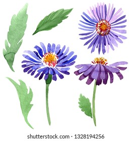 Blue violet asters floral botanical flowers. Wild spring leaf wildflower isolated. Watercolor background illustration set. Watercolour drawing fashion aquarelle. Isolated aster illustration element.