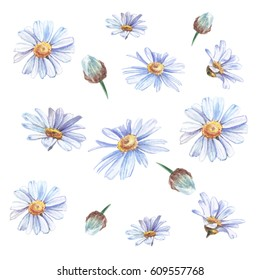 Blue watercolor daisies on white background
