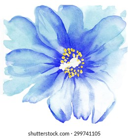 Blue watercolor flower, anemone.