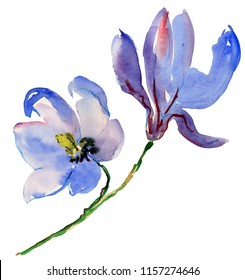 blue watercolor magnolia flowers.  festive bunch of flowers, floral decoration, isolated on white background