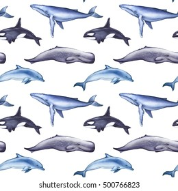 Blue whale, sperm whale, dolphin, killer whale seamless pattern on white background