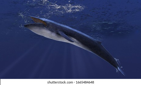 Blue whale underwater close to the sea surface chasing school of fish side view 3d rendering