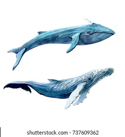 Blue whales set. Watercolor illustration isolated on white background.