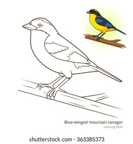 Blue Winged Mountain Tanager Bird Learn Birds Educational Game Coloring Book Raster Illustration