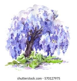 The blue wisteria tree. Hand drawn watercolor illustration