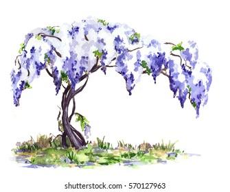 The blue wisteria vine. Hand drawn watercolor illustration