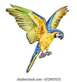 Blue and yellow Macaw bird. Parrot Flying. Watercolor. Illustration. Handmade. Template