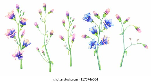 Bluebell flowers branch  on white background. Freehand watercolor illustration.