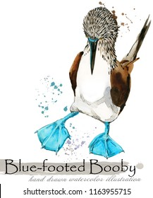 blue-footed booby hand drawn watercolor illustration
