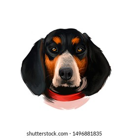 Bluetick Coonhound dog digital art illustration isolated on white background. United States origin raccoon hunting scenthound dog. Cute pet hand drawn portrait. Graphic clip art design for web, print