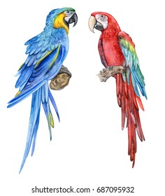 Blue-yellow macow. Red-and-green Macaw. Ara chloropterus. A parrot. Birds isolated on white background. Watercolor. Illustration. Picture. Image