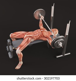 Bodybuilding gym exercising. Wide grip barbell bench press. Chest muscle group. Black background, half turn view
